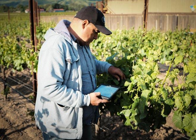 ПО AgCode для виноградников