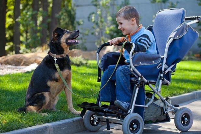 Терапия животными