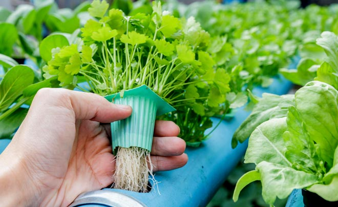 выращивание овощей без грунта