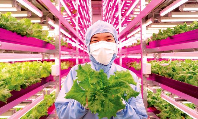 Японские технологии для овощей