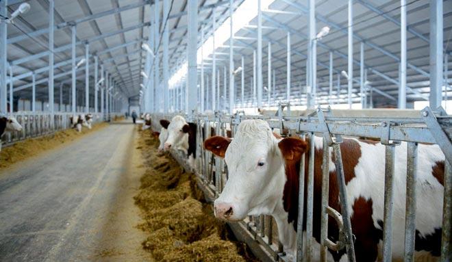 инновационные технологии в скотоводстве