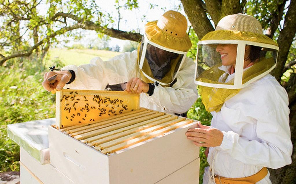 Пчелы как бизнес